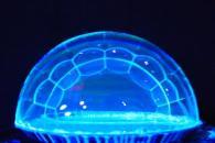 Шоу мыльных пузырей - неон. Детский празник в Чудо-Школе Умница